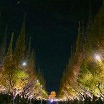 『外苑前銀杏並木ライ…
