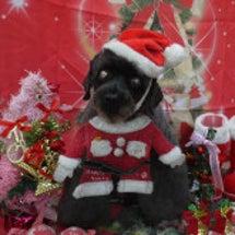 クリスマス準備しなき…