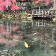 2回目の、モネの池