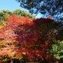 緑の文化園の紅葉は見…