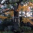 秋をゆっくり