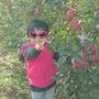 菅平高原の林檎