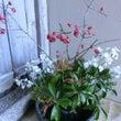 今週の野の花