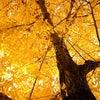 秋も深まってまいりましたの画像