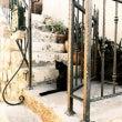 クロアチアの猫たち