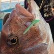 【テスト釣行】日本海…