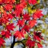 参加者募集中! 12/07(木)は恵比寿英会話サークルの活動日の画像