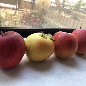 りんごの季節の画像