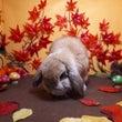 ウサギ撮影も秋模様
