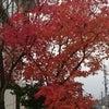 二度目の紅葉を堪能☆の画像