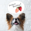 ■犬にいちごを食べさ…