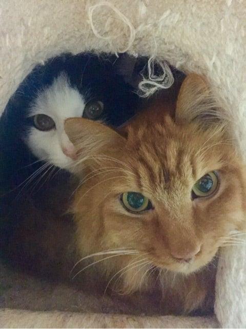 猫への強制給餌のコツとは?愛情を持って ...