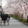 ■桜 ~命をつないだ…