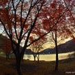 紅葉 ~奥多摩湖~