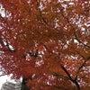 紅葉〜〜の画像