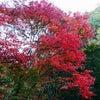 ワンコと娘と紅葉の画像