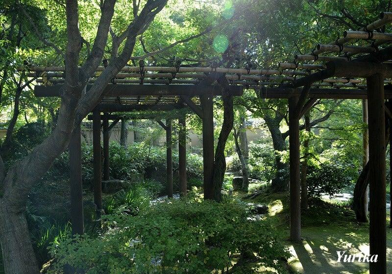 19夏木の庭