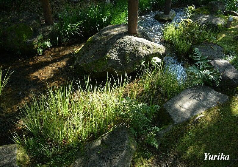 20夏木の庭