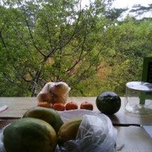 プナのジャングルに泊…