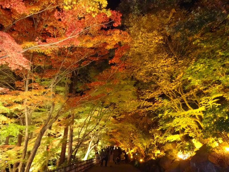 紅葉を見に行ってきました。