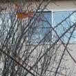 落葉でカルトハウス監…
