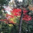 ムーちゃんちの紅葉