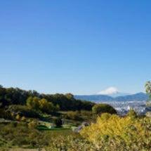 弘法山の黄葉とカミイ…