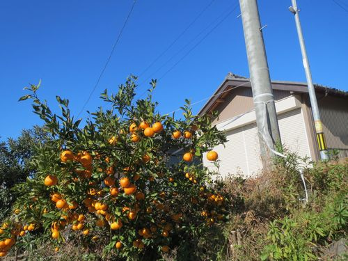 mandarinoj