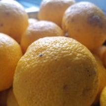 高知から届いた柚子