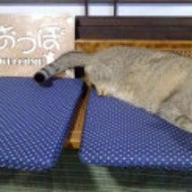 譲渡型保護猫カフェ …
