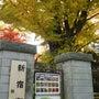紅葉(新宿御苑)