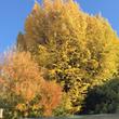 新宿御苑の紅葉と週末…