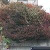 植木の剪定とホームページ開設の画像