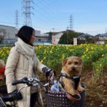 生田緑地へサイクリン…