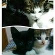仲良し猫たちパート2