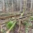 環境森林税