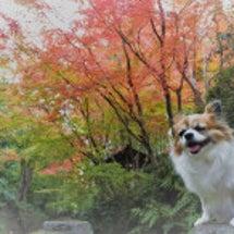 リンちゃん&紅葉
