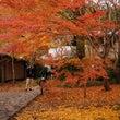 絶景かな、紅葉 京都…