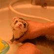 バスルームより○○を…