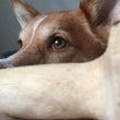 反省…愛犬のストレス…