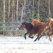 雪やこんこ 馬は喜び…