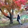 京都 美山の紅葉 2…