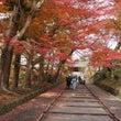 京都の紅葉 毘沙門堂…