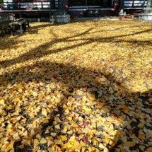 近場で紅葉を楽しむ …