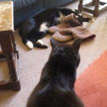 猫の兄弟仲