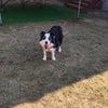 11月 日帰りキャンプ・お泊まりキャンプの犬たちの画像