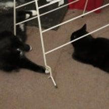 白黒猫、名誉挽回