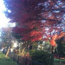 八幡山の紅葉