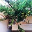 枝を生けてクリスマス…