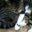 猫カフェレポート2(…